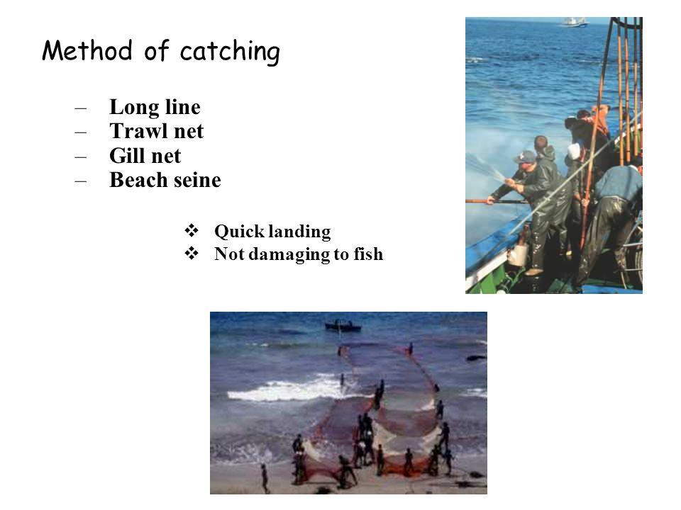 Method of catching Long line Trawl net Gill net Beach seine