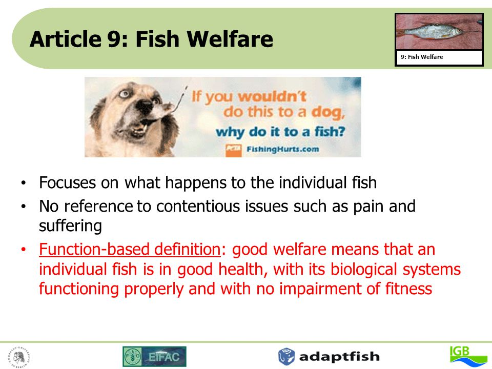 Article 9: Fish Welfare Focuses on what happens to the individual fish