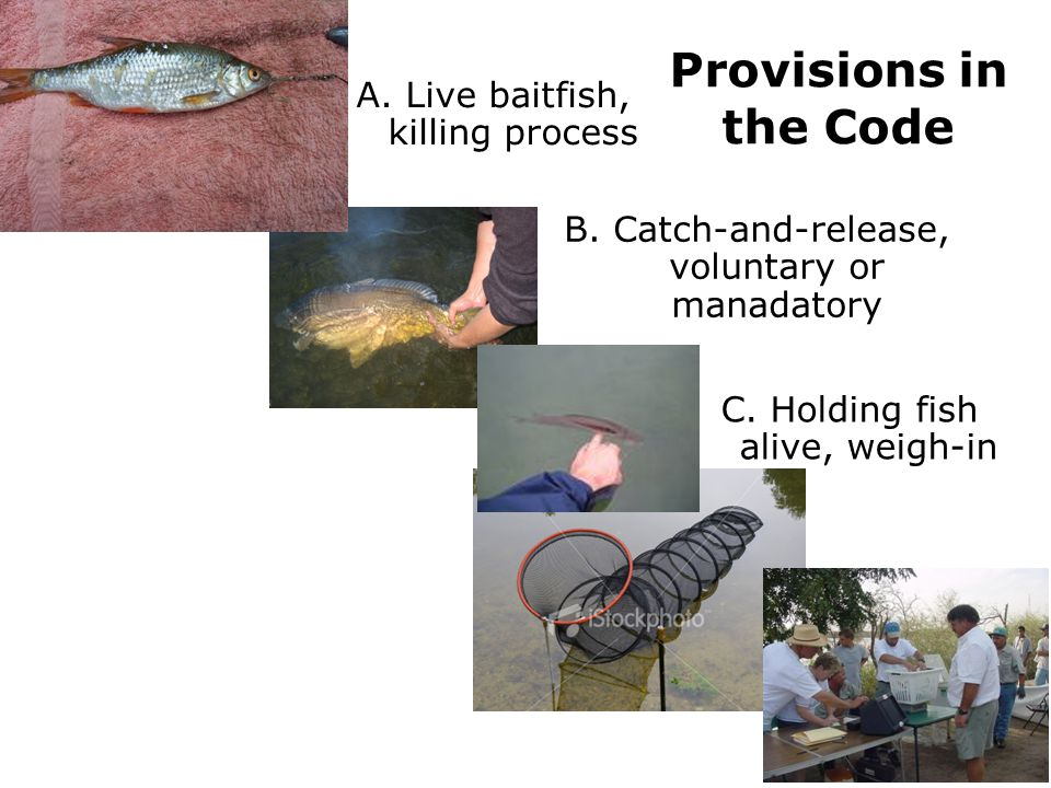 Provisions in the Code A. Live baitfish, killing process
