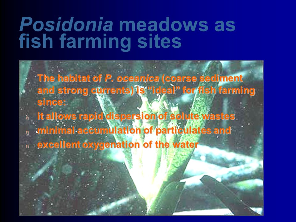 Posidonia meadows as fish farming sites