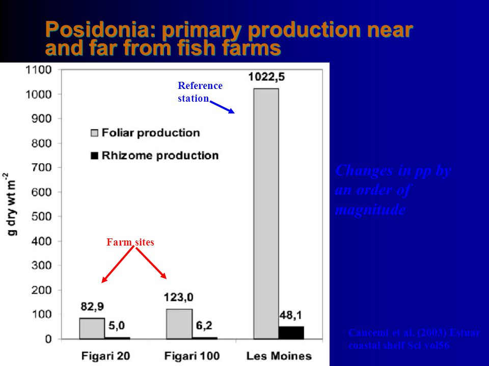 Posidonia: primary production near and far from fish farms
