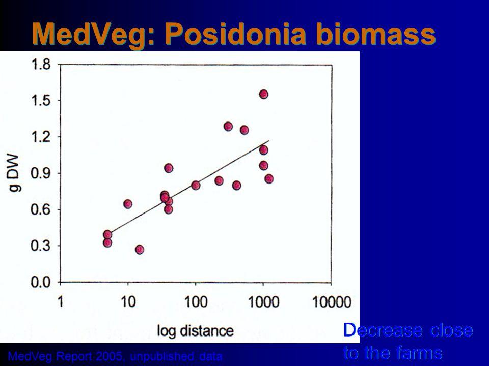 MedVeg: Posidonia biomass