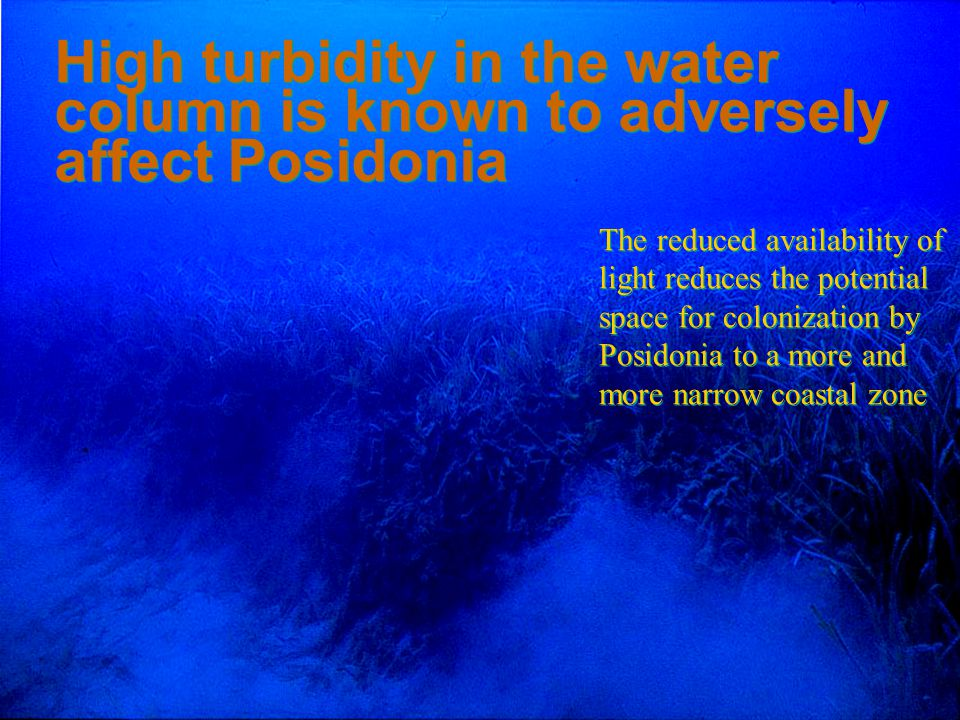 4/14/2017 High turbidity in the water column is known to adversely affect Posidonia.