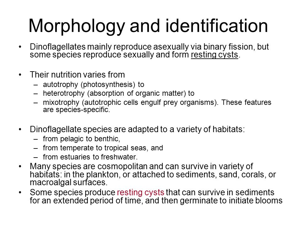 Morphology and identification