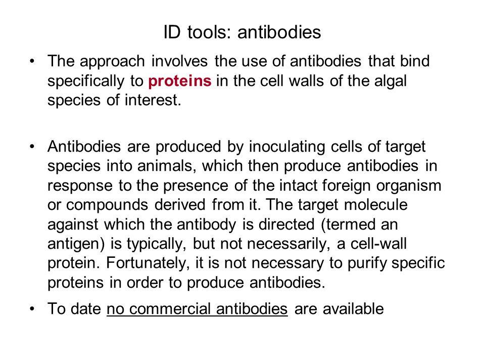 ID tools: antibodies