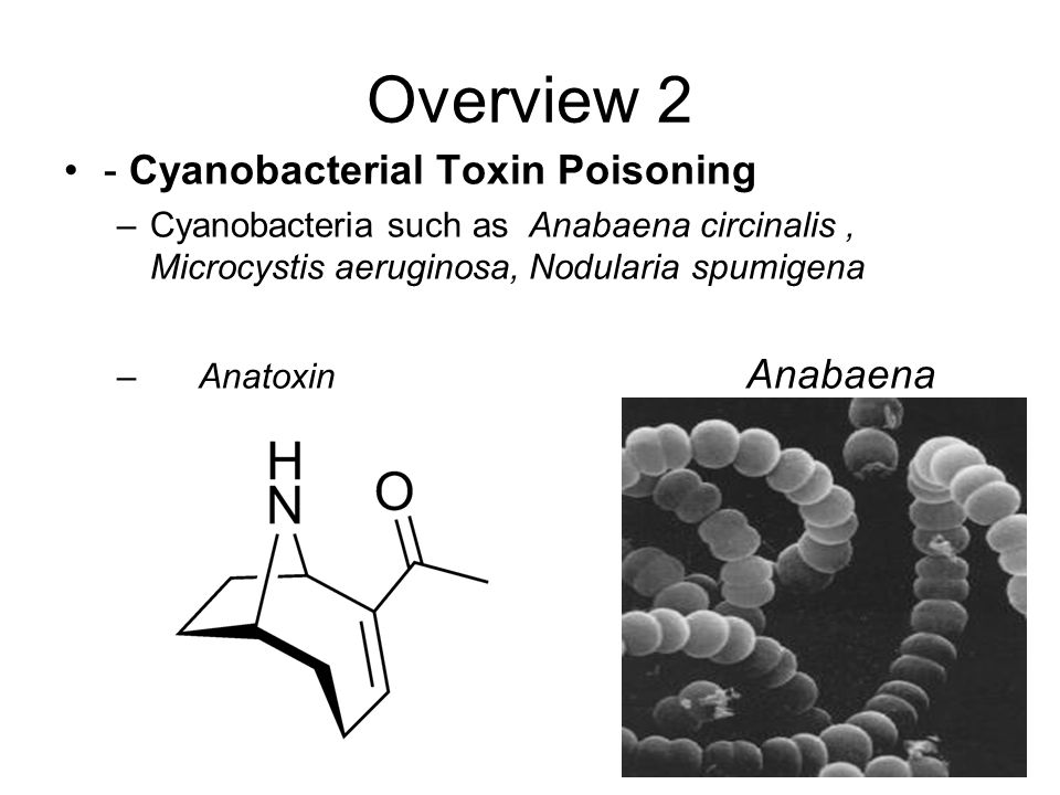 Overview 2 - Cyanobacterial Toxin Poisoning