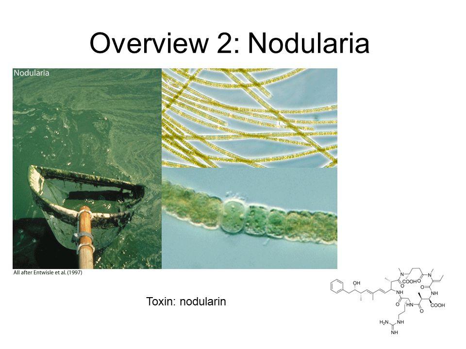 Overview 2: Nodularia Toxin: nodularin