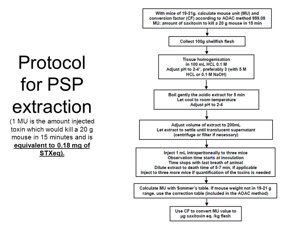 Protocol for PSP extraction (1 MU is the amount injected toxin which would kill a 20 g mouse in 15 minutes and is equivalent to 0.18 mg of STXeq).