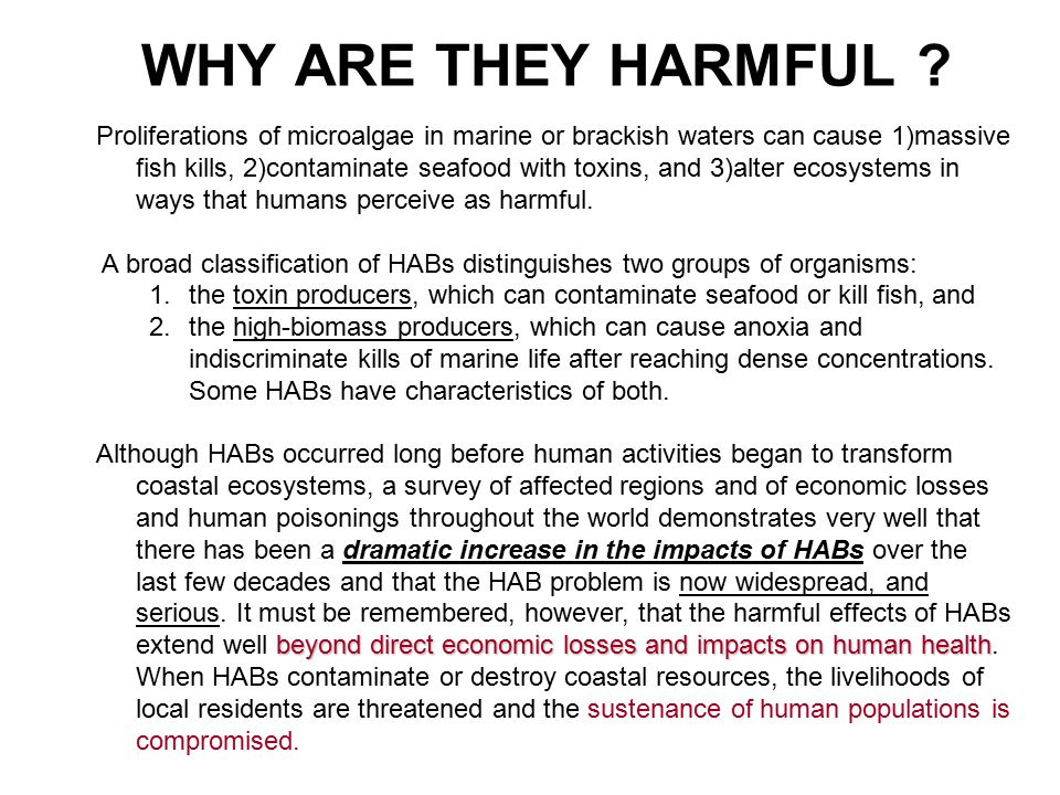 WHY ARE THEY HARMFUL