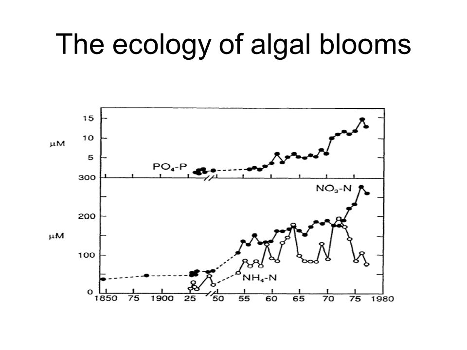 The ecology of algal blooms