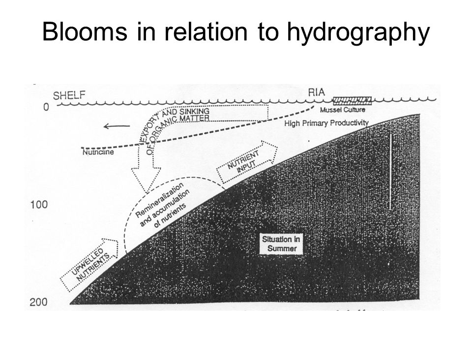 Blooms in relation to hydrography