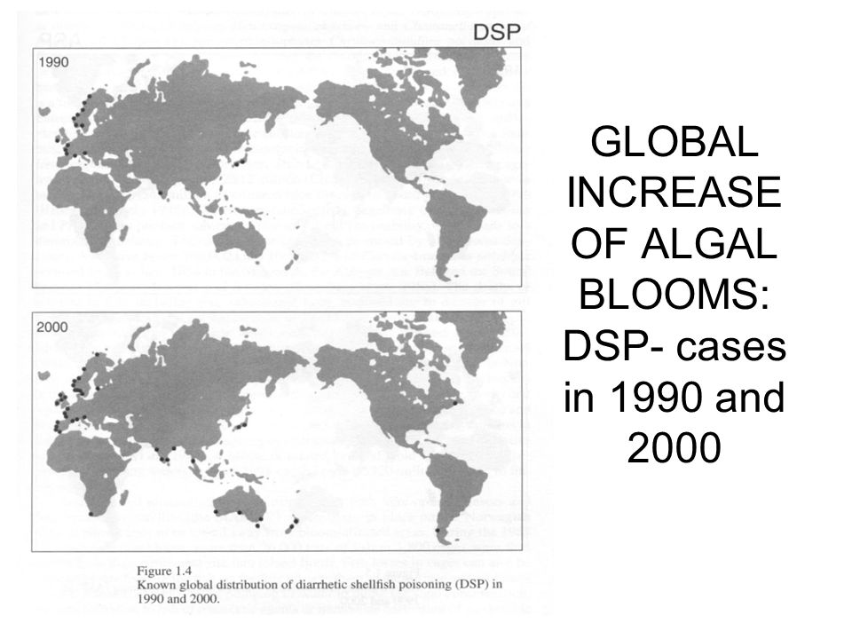 GLOBAL INCREASE OF ALGAL BLOOMS: DSP- cases in 1990 and 2000