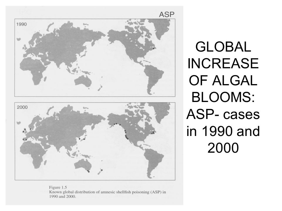 GLOBAL INCREASE OF ALGAL BLOOMS: ASP- cases in 1990 and 2000