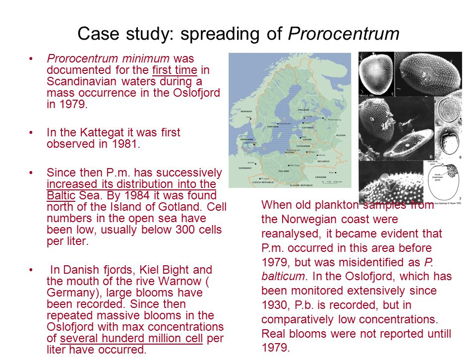 Case study: spreading of Prorocentrum