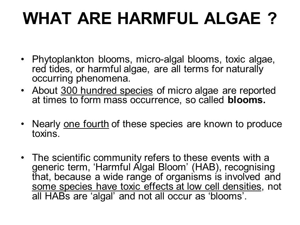 WHAT ARE HARMFUL ALGAE