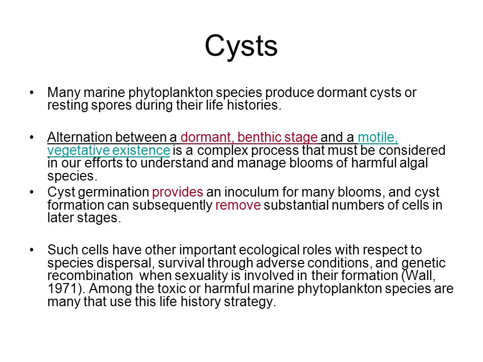 Cysts Many marine phytoplankton species produce dormant cysts or resting spores during their life histories.