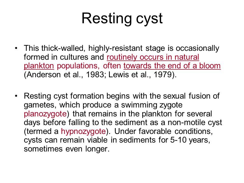 Resting cyst