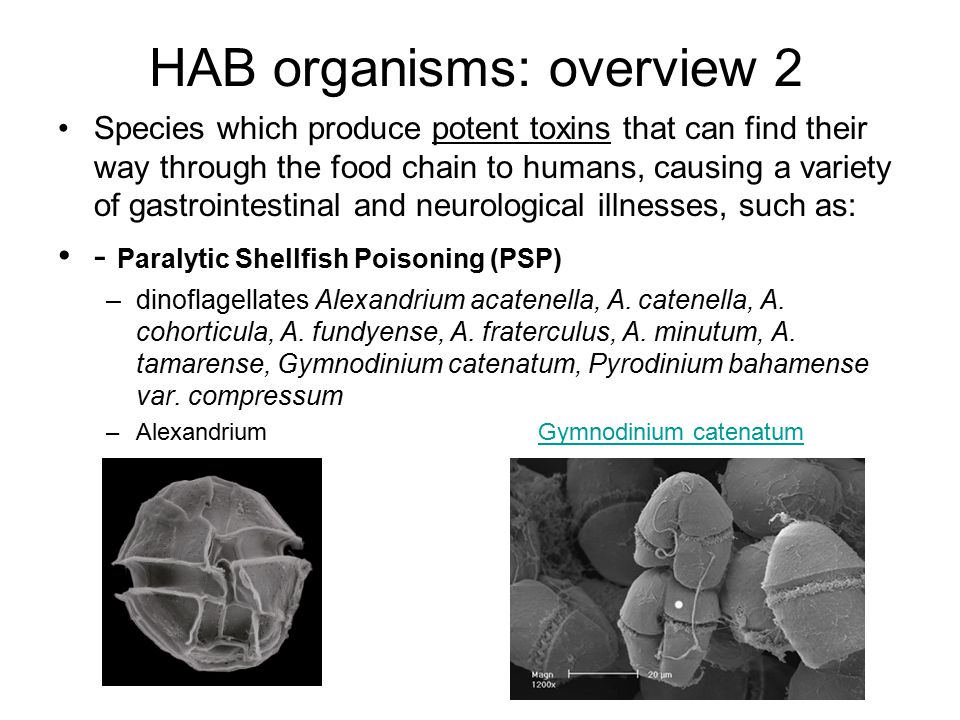 HAB organisms: overview 2