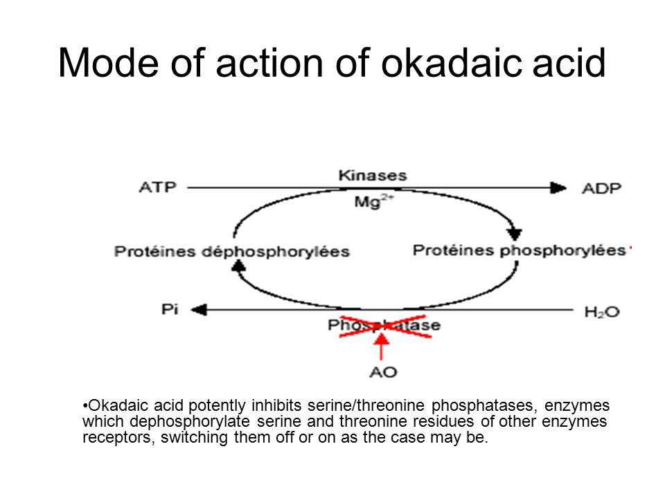 Mode of action of okadaic acid