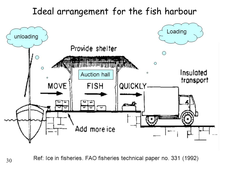 Ideal arrangement for the fish harbour