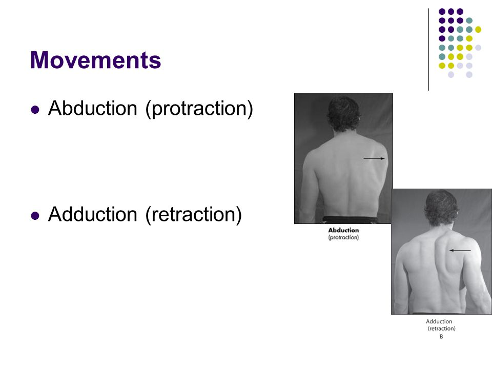 Movements Abduction (protraction) Adduction (retraction)