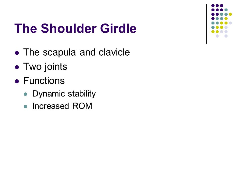 The Shoulder Girdle The scapula and clavicle Two joints Functions