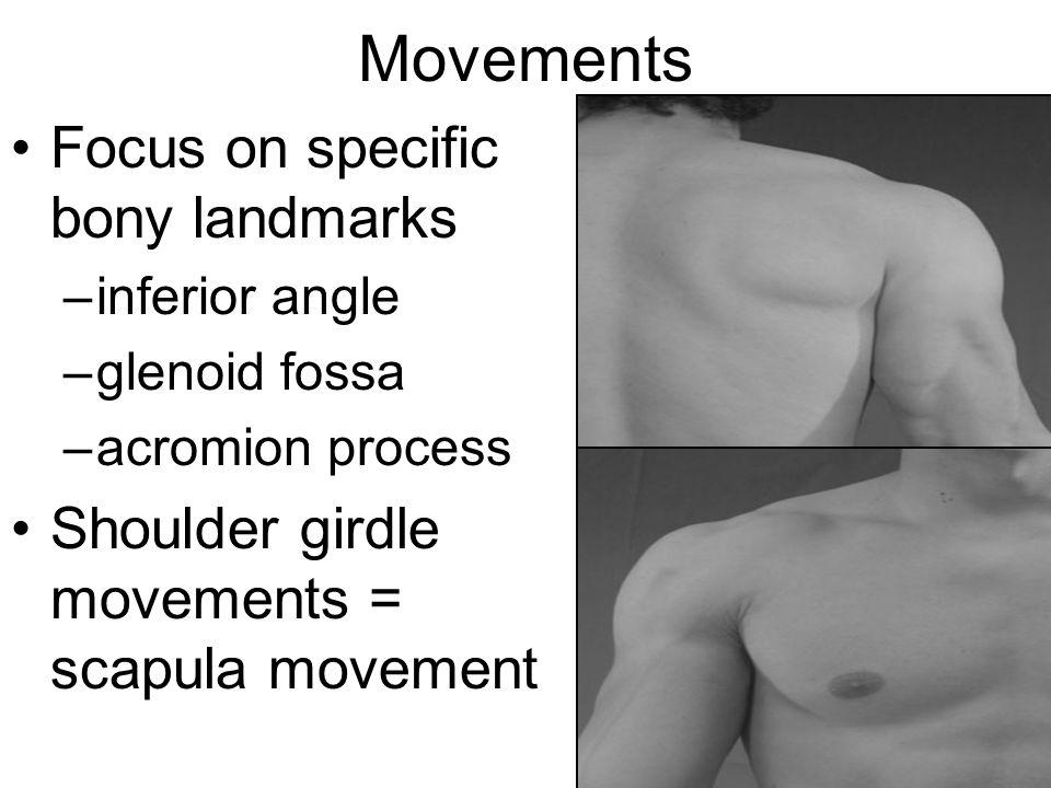 Movements Focus on specific bony landmarks