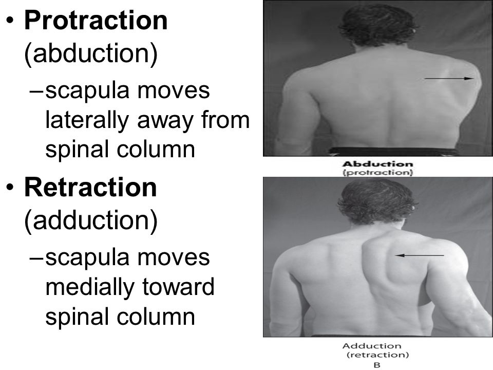 Protraction (abduction)
