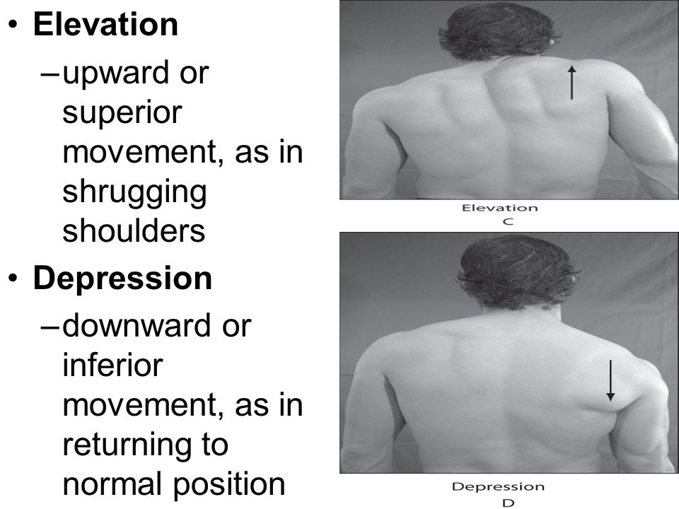 Elevation upward or superior movement, as in shrugging shoulders.