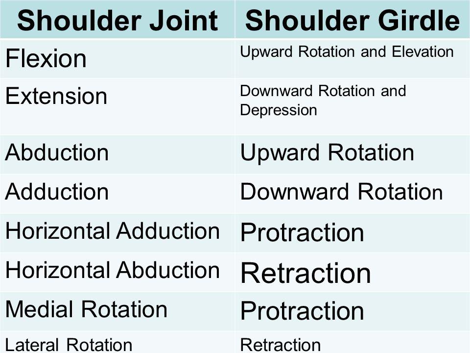 Shoulder Joint Shoulder Girdle