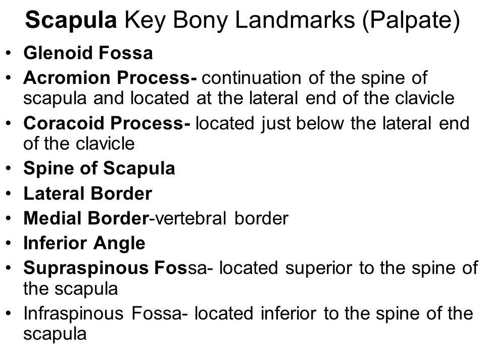 Scapula Key Bony Landmarks (Palpate)