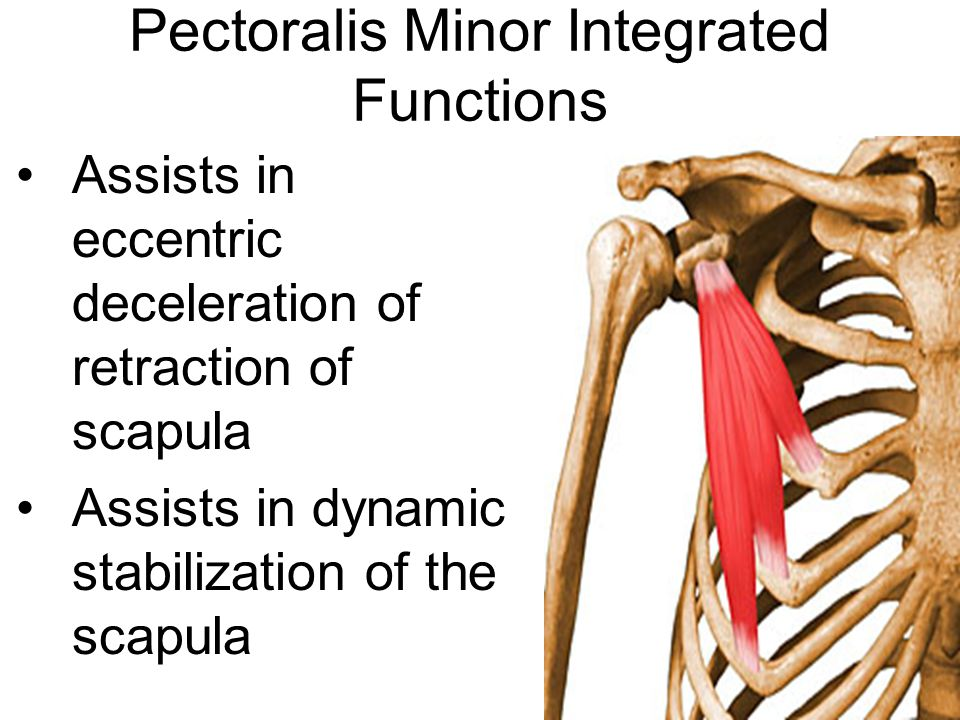 Pectoralis Minor Integrated Functions