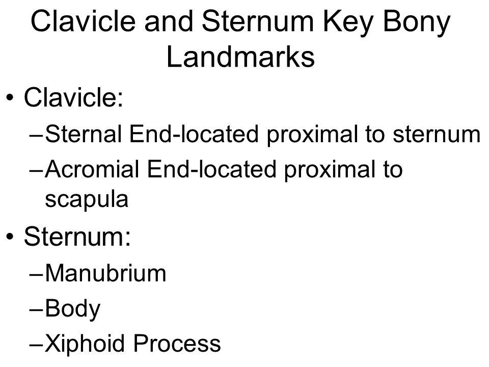 Clavicle and Sternum Key Bony Landmarks