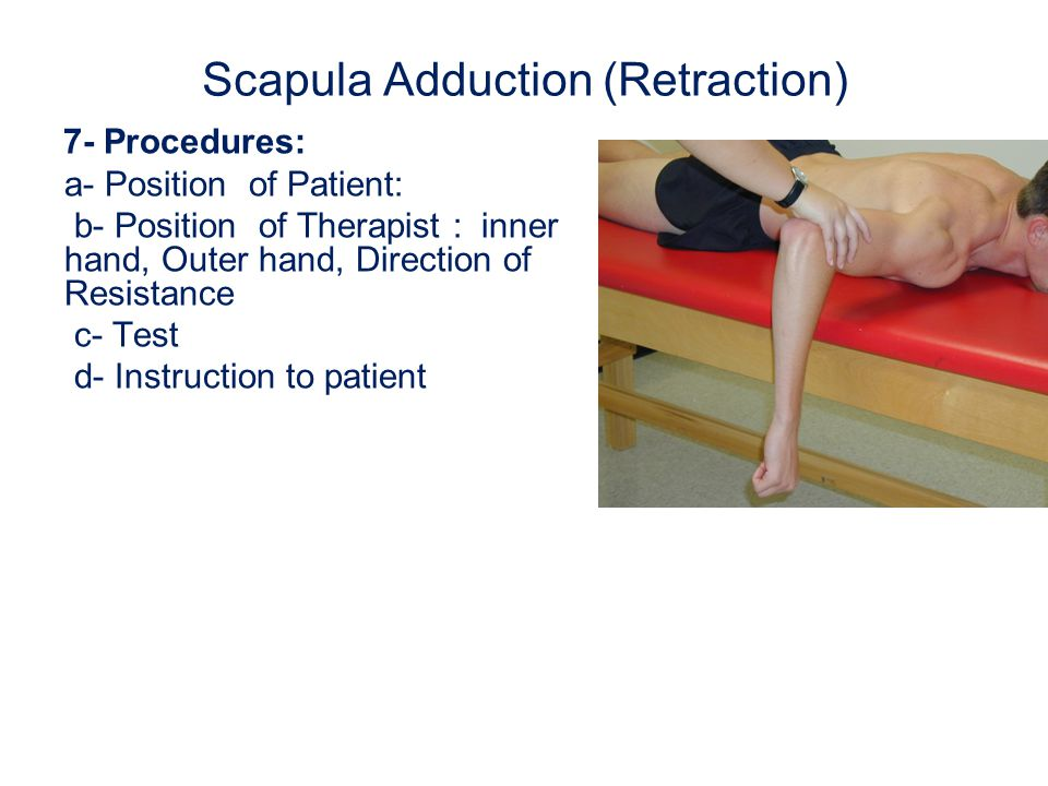 Scapula Adduction (Retraction)