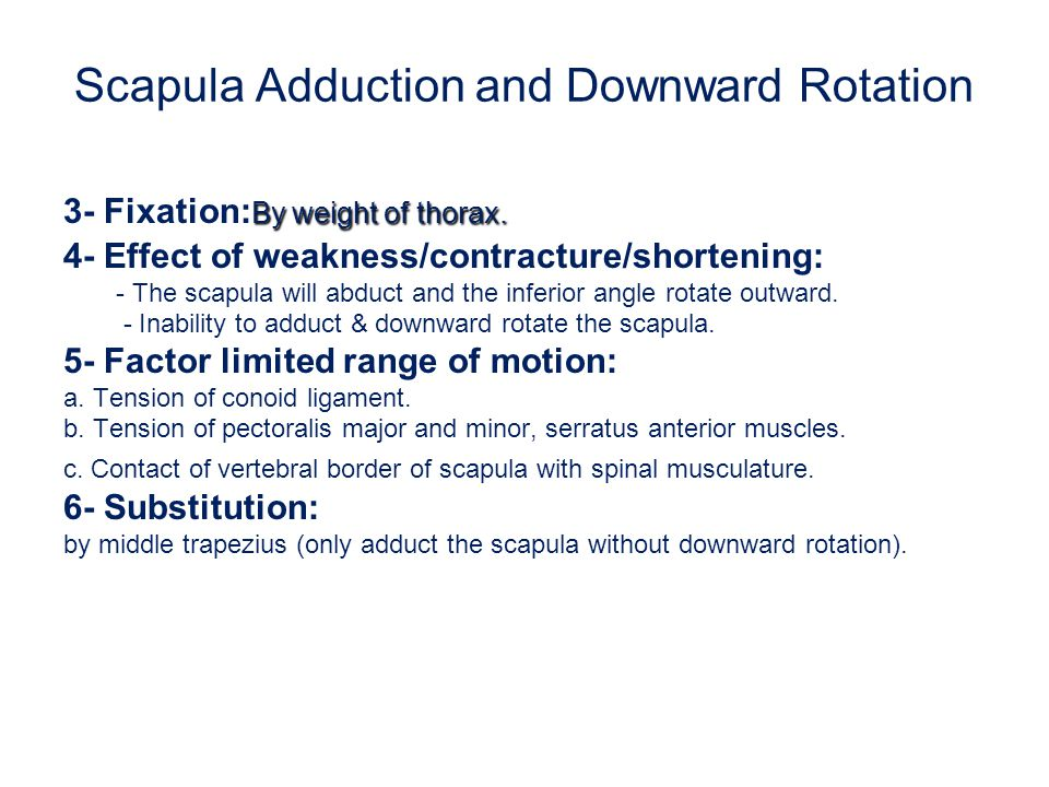 Scapula Adduction and Downward Rotation