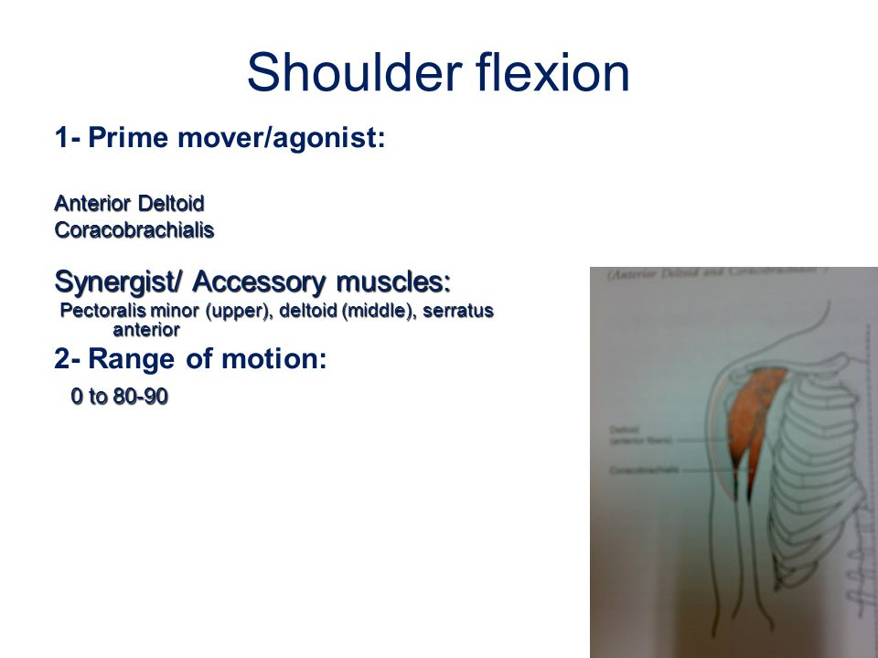 Shoulder flexion 1- Prime mover/agonist: Synergist/ Accessory muscles:
