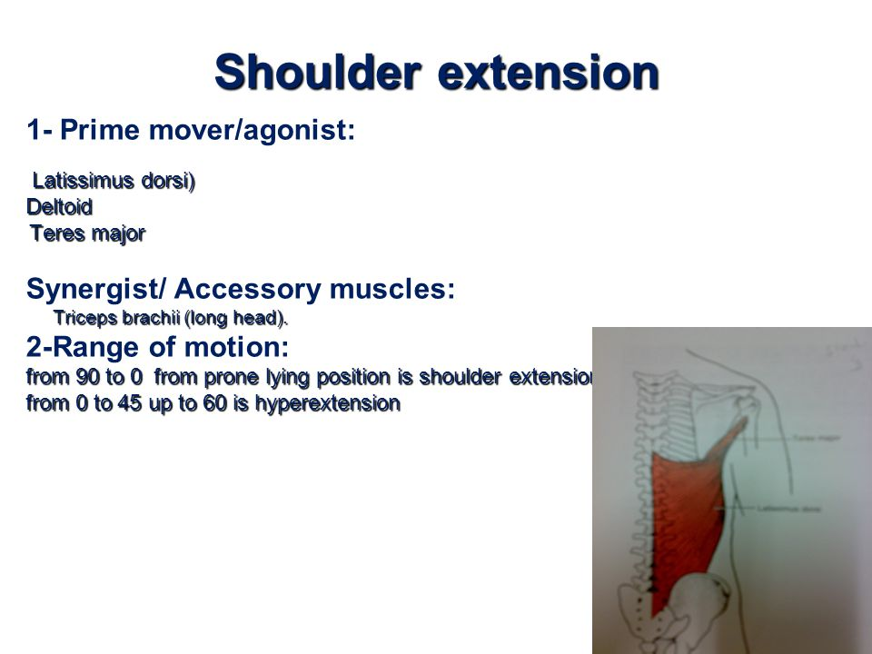 Shoulder extension 1- Prime mover/agonist: