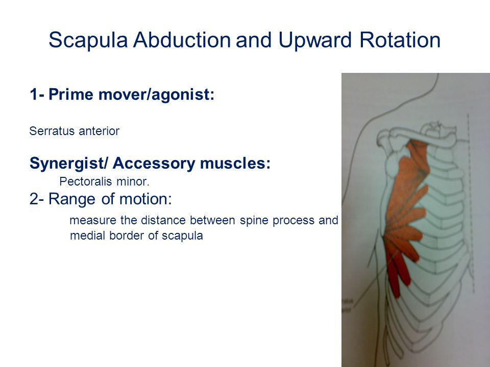 Scapula Abduction and Upward Rotation