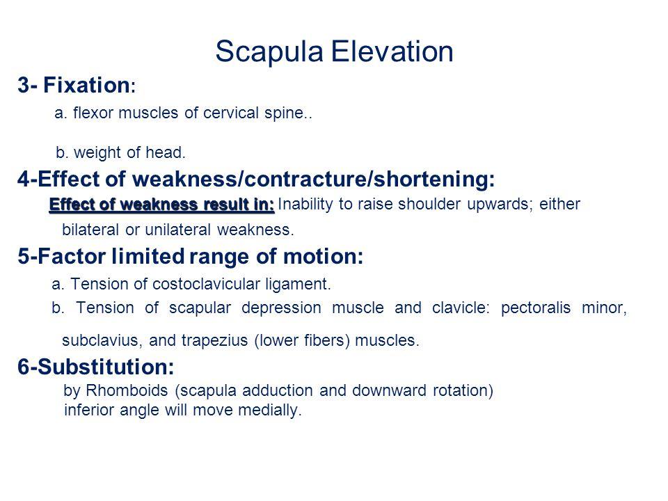 Scapula Elevation 3- Fixation: