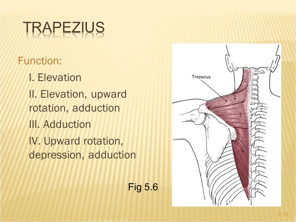 Trapezius Function: I. Elevation