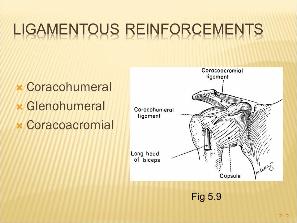 Ligamentous Reinforcements