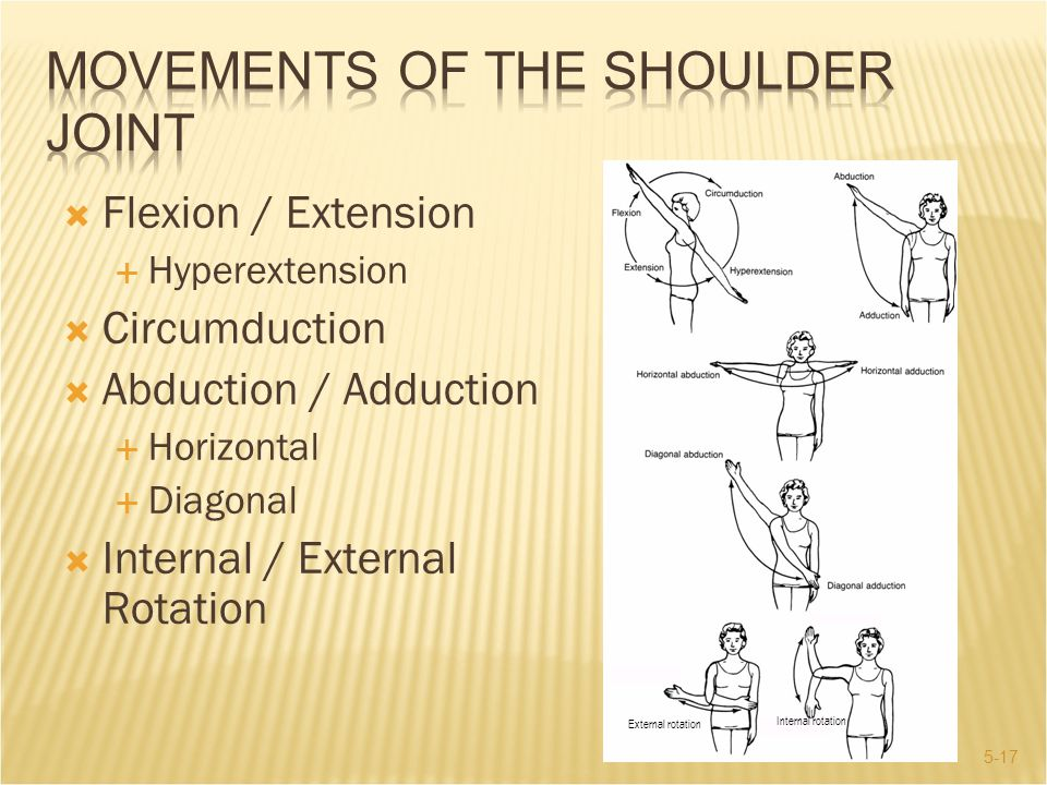 Movements of the Shoulder Joint