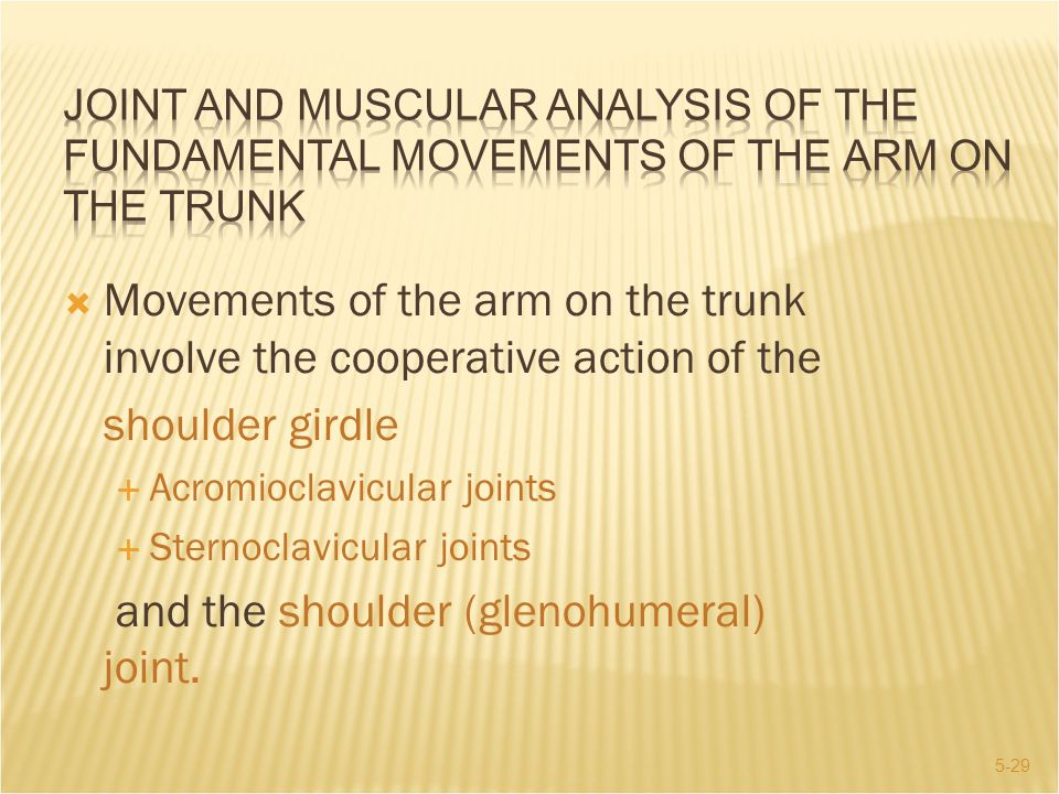 and the shoulder (glenohumeral) joint.