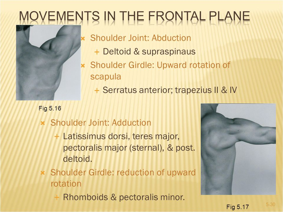 Movements in the Frontal Plane