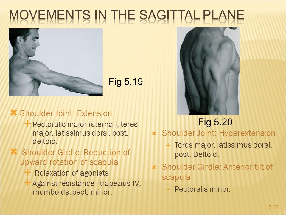 Movements in the Sagittal Plane