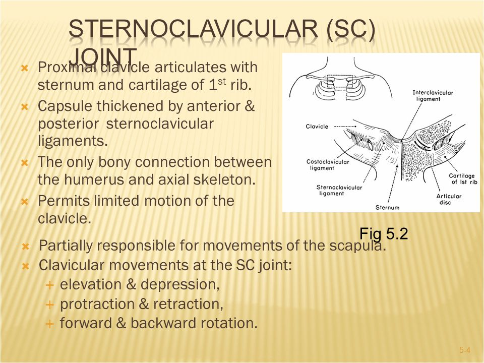 Sternoclavicular (SC) Joint