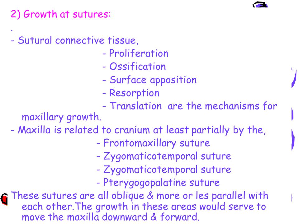 2) Growth at sutures: . - Sutural connective tissue, - Proliferation. - Ossification. - Surface apposition.