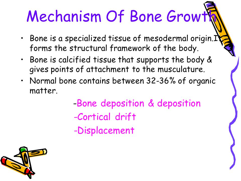 Mechanism Of Bone Growth