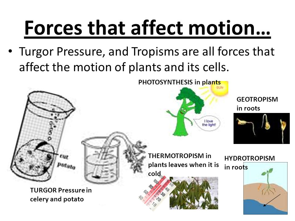 Forces that affect motion…