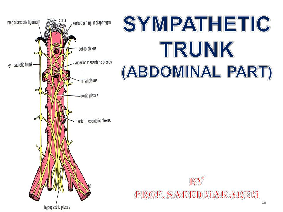 SYMPATHETIC TRUNK (ABDOMINAL PART)